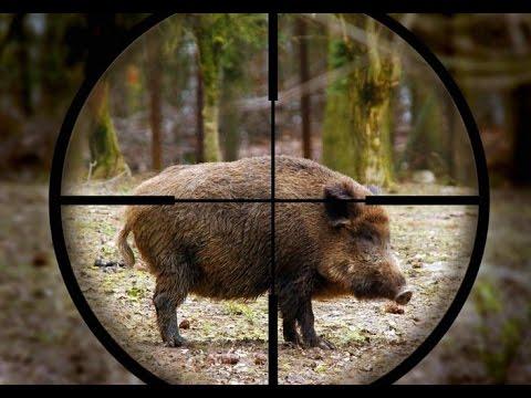 Vaddisznó vadászat – Videó összeállítás vadászatokról