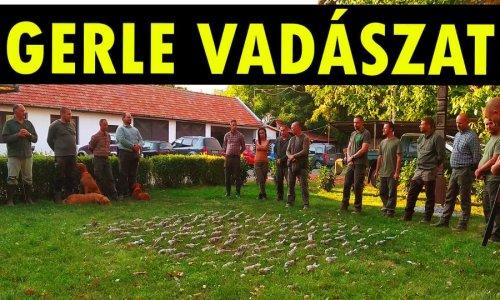 Szeptemberi Balkáni gerle vadászat – Kacsala Mihály beszámoló videója